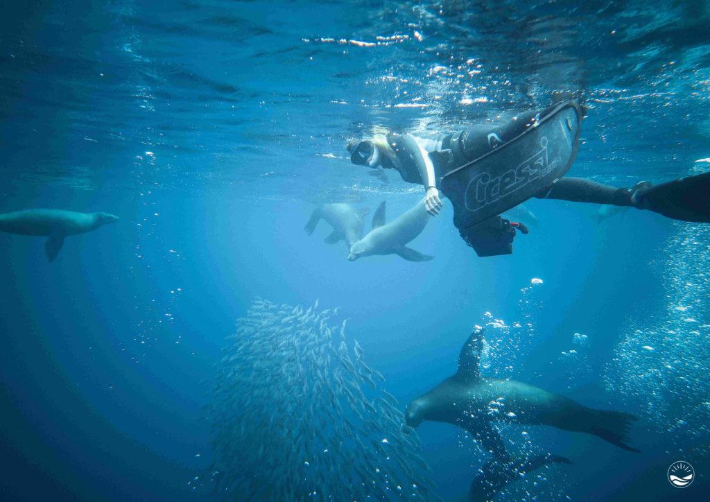 The blue Quest - Baja California